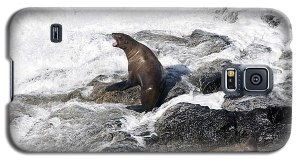Steller Sea Lion - 0036 Galaxy S5 Case by S and S Photo