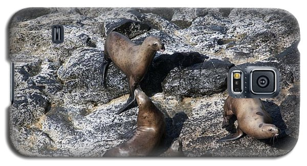 Steller Sea Lion - 0037 Galaxy S5 Case by S and S Photo