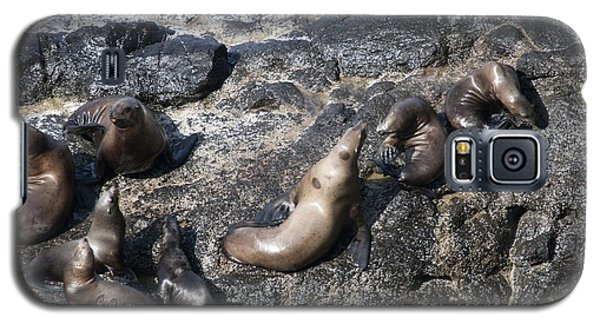 Steller Sea Lion - 0038 Galaxy S5 Case by S and S Photo