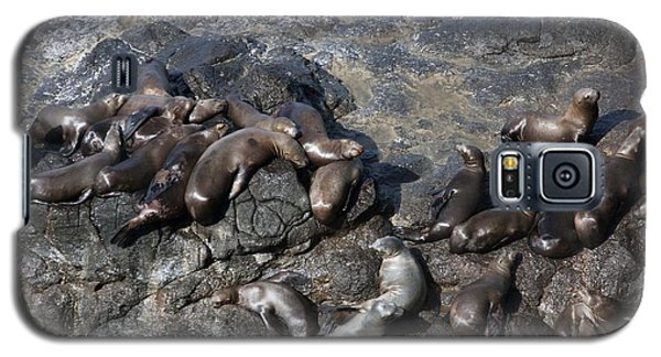Steller Sea Lion - 0040 Galaxy S5 Case by S and S Photo