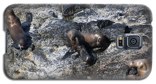 Steller Sea Lion - 0041 Galaxy S5 Case by S and S Photo