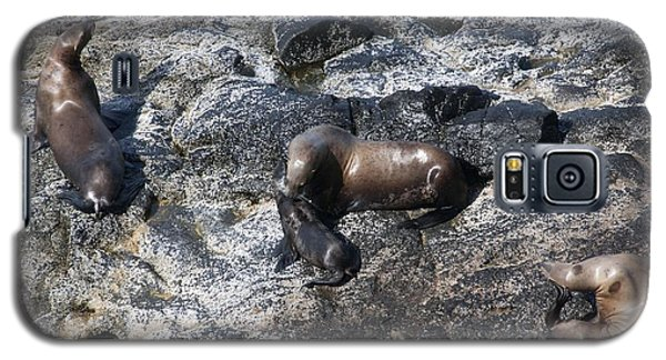 Steller Sea Lion - 0042 Galaxy S5 Case by S and S Photo