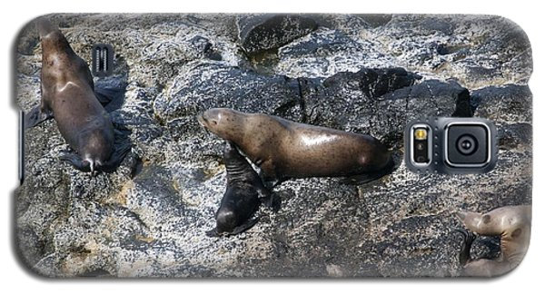 Steller Sea Lion - 0043 Galaxy S5 Case by S and S Photo