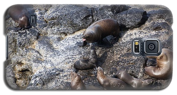 Steller Sea Lion - 0044 Galaxy S5 Case by S and S Photo