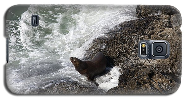 Steller Sea Lion - 0045 Galaxy S5 Case by S and S Photo