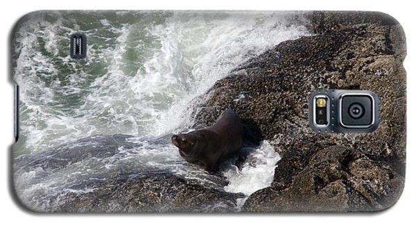 Steller Sea Lion - 0046 Galaxy S5 Case by S and S Photo