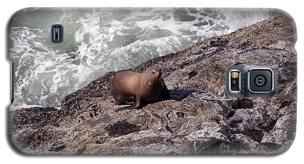 Steller Sea Lion - 0029 Galaxy S5 Case by S and S Photo