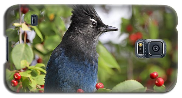 Steller's Jay And Red Berries Galaxy S5 Case by Teresa Zieba