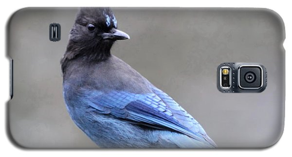 Steller's Jay Galaxy S5 Case by Angie Vogel