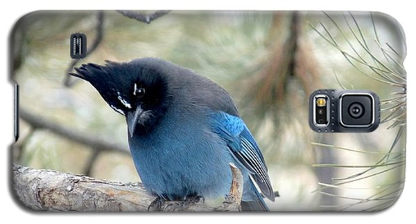 Steller's Jay Looking Down Galaxy S5 Case by Marilyn Burton