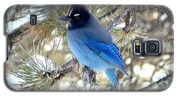 Steller's Jay Profile Galaxy S5 Case by Marilyn Burton