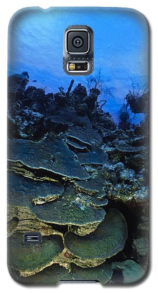 Steps Of The Sea Galaxy S5 Case