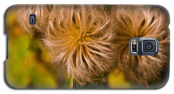 Steroid Dandelion Galaxy S5 Case