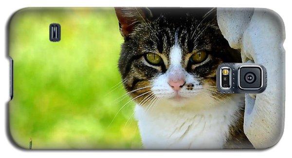 Still Galaxy S5 Case by Deena Stoddard
