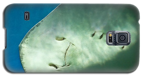 Galaxy S5 Case featuring the photograph Stingray Face by Eti Reid