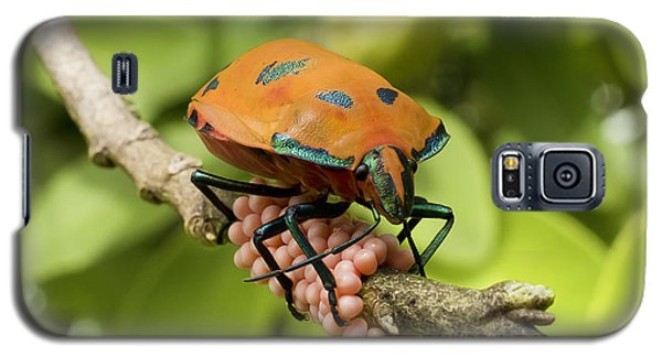 Galaxy S5 Case featuring the photograph Stink Bug Eggs 00001 by Kevin Chippindall