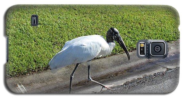 Galaxy S5 Case featuring the photograph Stork by John Mathews