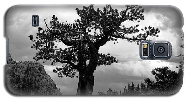 Storm Tree Galaxy S5 Case