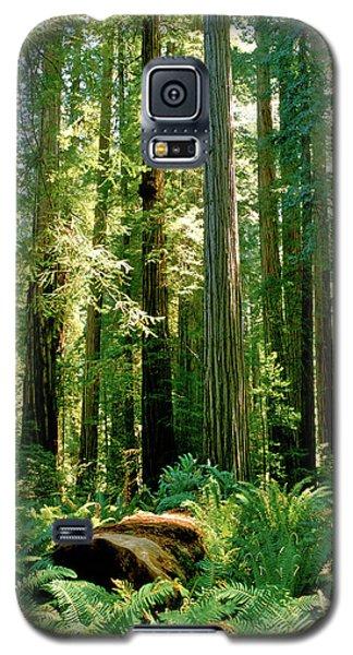 Stout Grove Coastal Redwoods Galaxy S5 Case