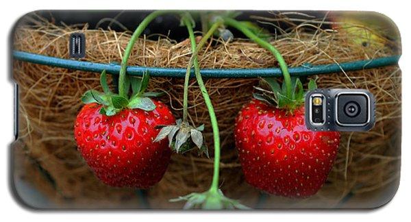 Strawberries Galaxy S5 Case by Pamela Walton