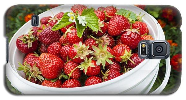 Strawberry Harvest Galaxy S5 Case by Elena Elisseeva
