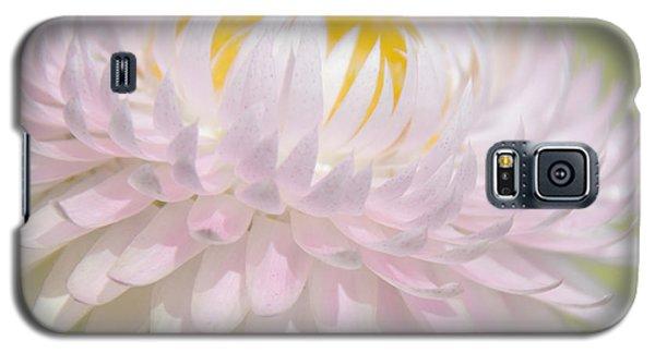 Strawflower In Soft Focus Galaxy S5 Case by A Gurmankin
