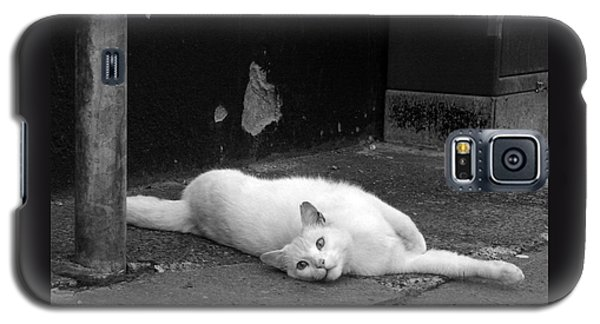 Street Cat Galaxy S5 Case