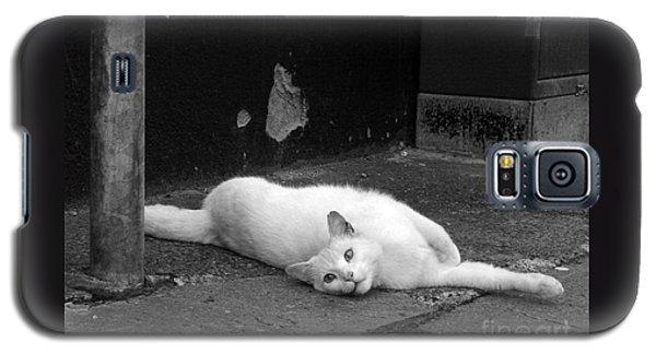 Street Cat Galaxy S5 Case