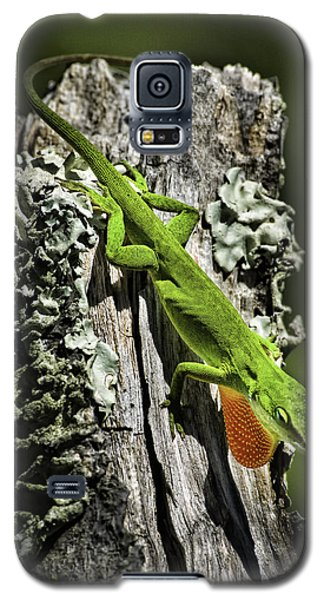 Stressed Anole Galaxy S5 Case