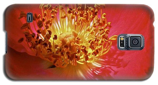 Striking It Rich Galaxy S5 Case