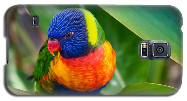 Striking Rainbow Lorakeet Galaxy S5 Case