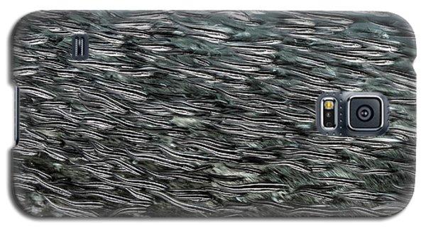 Striped Catfish Galaxy S5 Case by Ethan Daniels