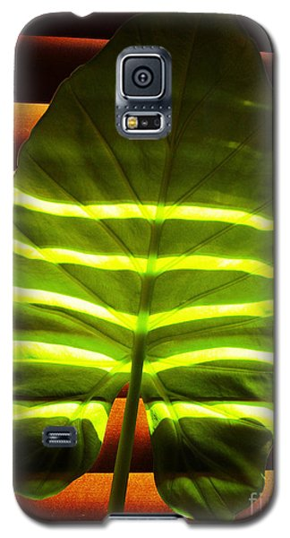 Stripes Of Light Galaxy S5 Case by Nina Ficur Feenan