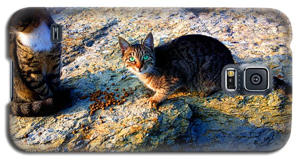 Strong-willed Cat Galaxy S5 Case