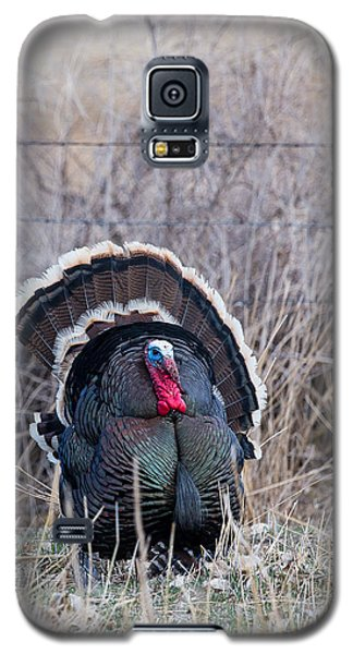 Strutting Turkey Galaxy S5 Case