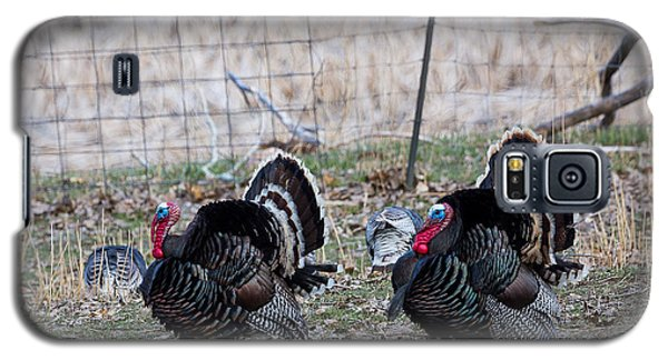 Strutting Turkeys Galaxy S5 Case