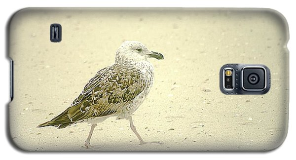 Galaxy S5 Case featuring the photograph Strutting Young Seagull  by Suzanne Powers