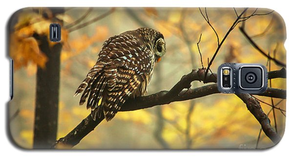 Stubborn Owl Galaxy S5 Case