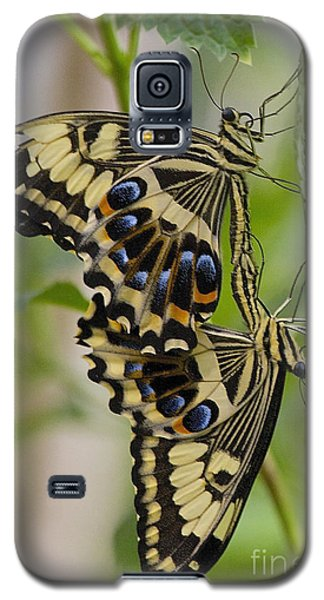 Galaxy S5 Case featuring the photograph Stuck On You by Ruth Jolly