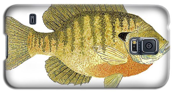 Study Of A Bluegill Sunfish Galaxy S5 Case
