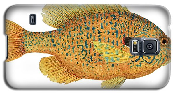 Study Of A Male Pumpkinseed Sunfish In Spawning Brilliance Galaxy S5 Case