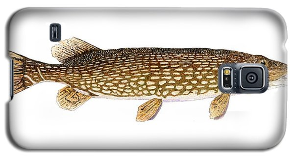 Study Of A Northern Pike Galaxy S5 Case