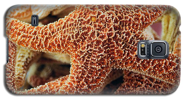 Study Of A Starfish Galaxy S5 Case by Tikvah's Hope
