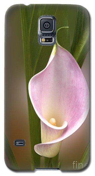 Stunning Pink Calla Lily Galaxy S5 Case by Deborah Smolinske