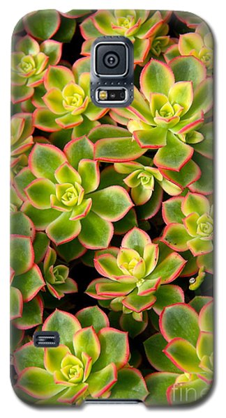 Succulent Glow Galaxy S5 Case by Suzanne Oesterling