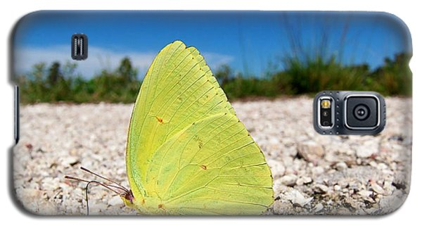 Galaxy S5 Case featuring the photograph Sulphur Yellow Butterfly by Chris Mercer