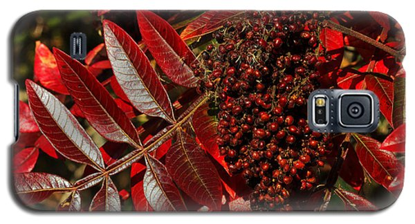 Sumac At Prime Hook Galaxy S5 Case