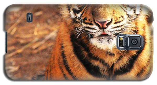 Galaxy S5 Case featuring the photograph Sumatran Tiger Cub by Olivia Hardwicke