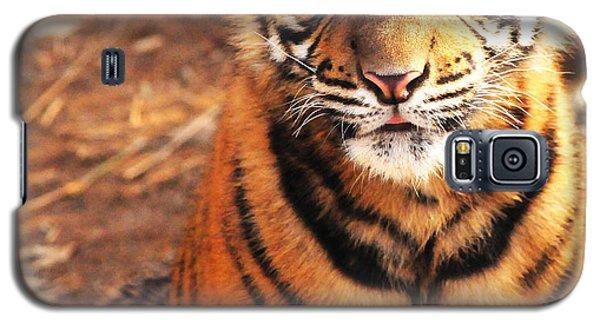 Sumatran Tiger Cub Galaxy S5 Case
