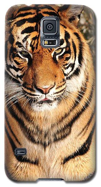 Galaxy S5 Case featuring the photograph Sumatran Tiger by Olivia Hardwicke